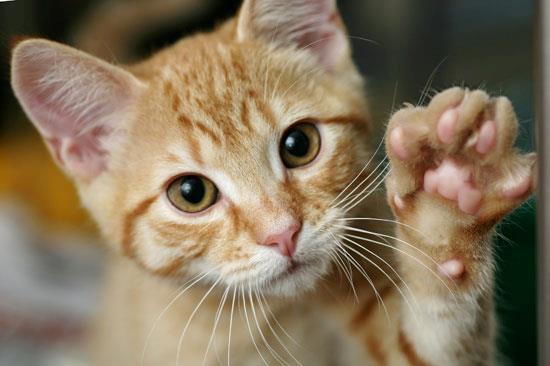 hvad spiser katte