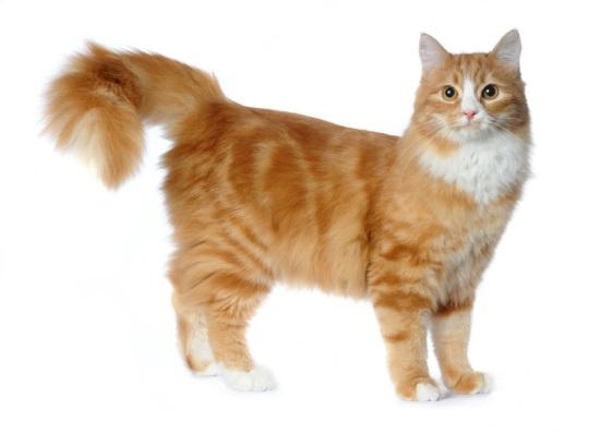 urin fra en kat